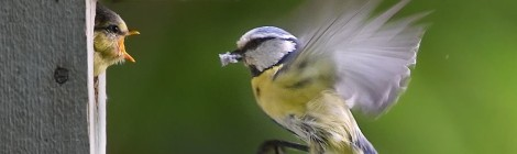 Fuglenes dag
