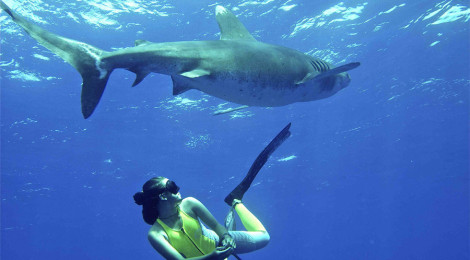 """Odd-Dok viser """"Shark Girl"""""""