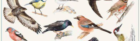 Fuglenes dag i Nesoddparken
